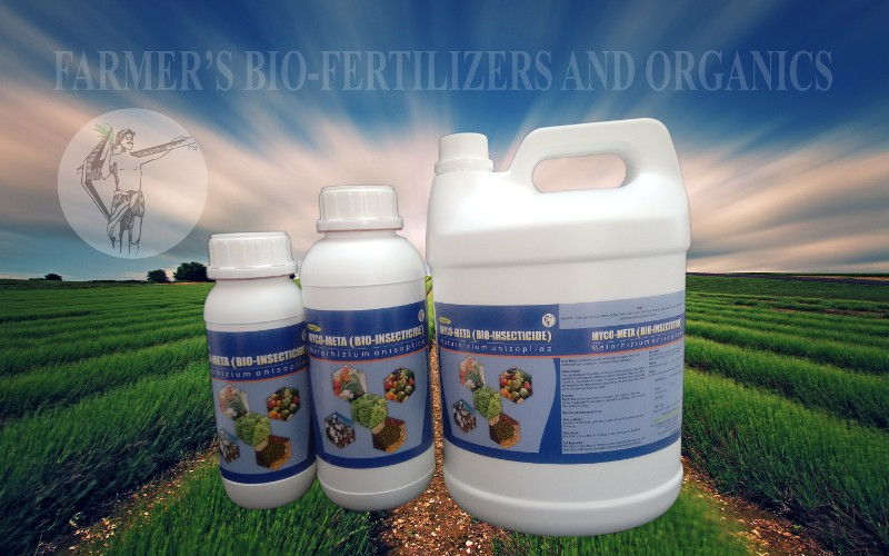 Myco-Meta (Bio-insecticide): Metarhizium anisopliae